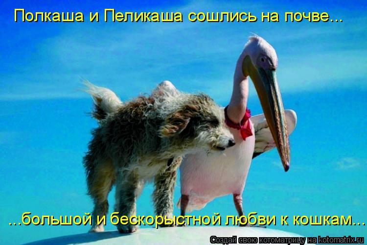 Котоматрица: Полкаша и Пеликаша сошлись на почве... ...большой и бескорыстной любви к кошкам...