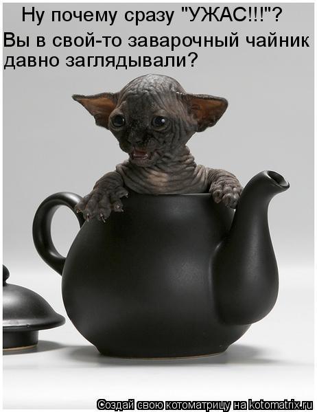 """Котоматрица: Ну почему сразу """"УЖАС!!!""""? Вы в свой-то заварочный чайник  давно заглядывали?"""