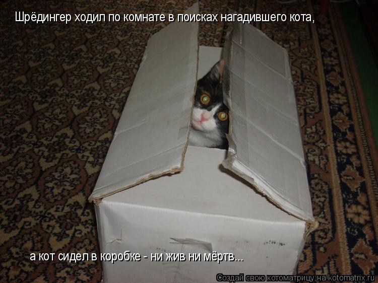 Котоматрица: Шрёдингер ходил по комнате в поисках нагадившего кота,  а кот сидел в коробке - ни жив ни мёртв...