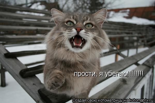 Котоматрица: прости, я убегаю!!!!!!!!