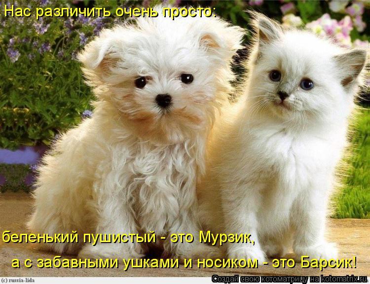 Котоматрица: Нас различить очень просто: беленький пушистый - это Мурзик, а с забавными ушками и носиком - это Барсик!