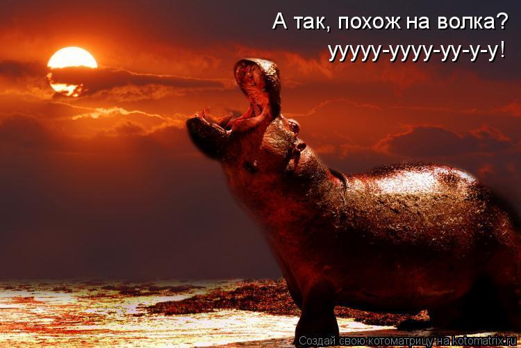 Котоматрица: А так, похож на волка?  ууууу-уууу-уу-у-у!