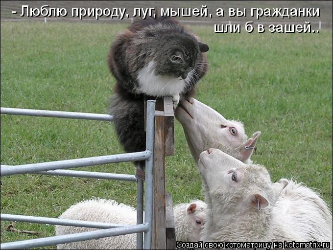 Котоматрица: - Люблю природу, луг, мышей, а вы гражданки шли б в зашей..