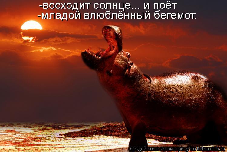 Котоматрица: -восходит солнце... и поёт -младой влюблённый бегемот.