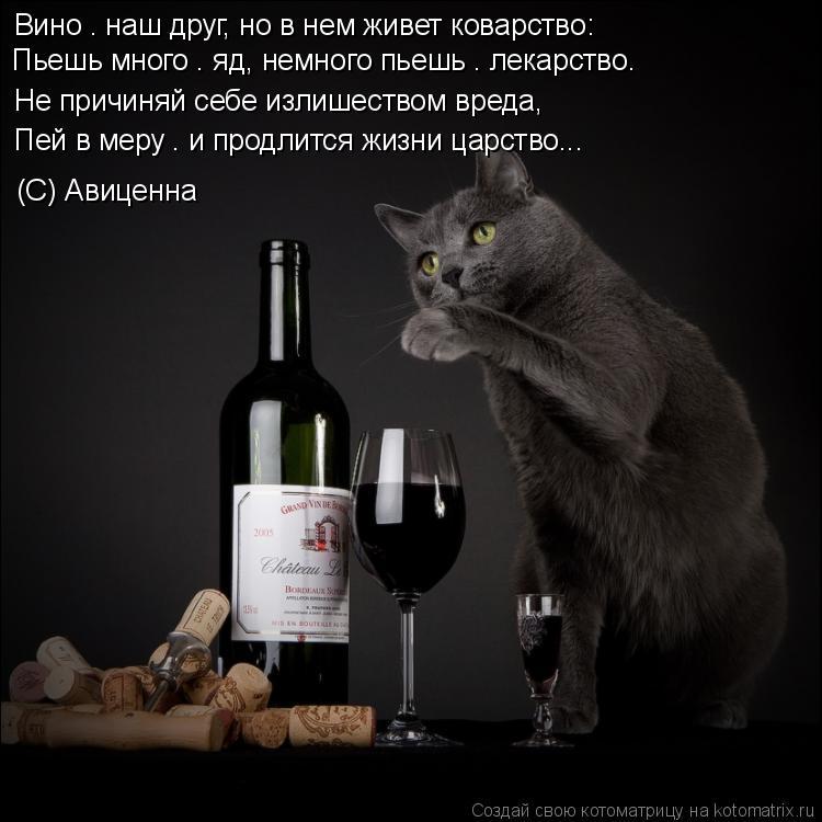 Котоматрица: Не причиняй себе излишеством вреда,  Пей в меру – и продлится жизни царство... Вино – наш друг, но в нем живет коварство:  (С) Авиценна  Пьешь м