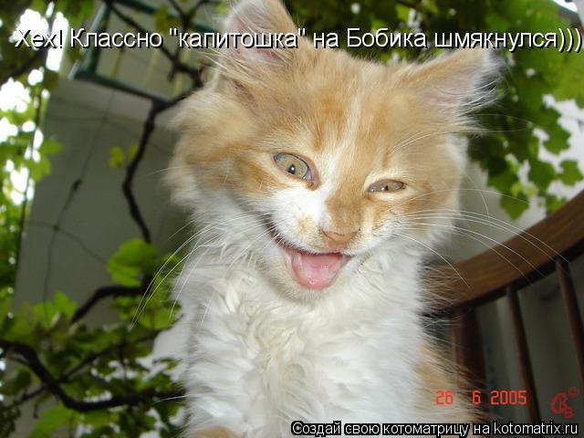 "Котоматрица: Хех! Классно ""капитошка"" на Бобика шмякнулся)))"