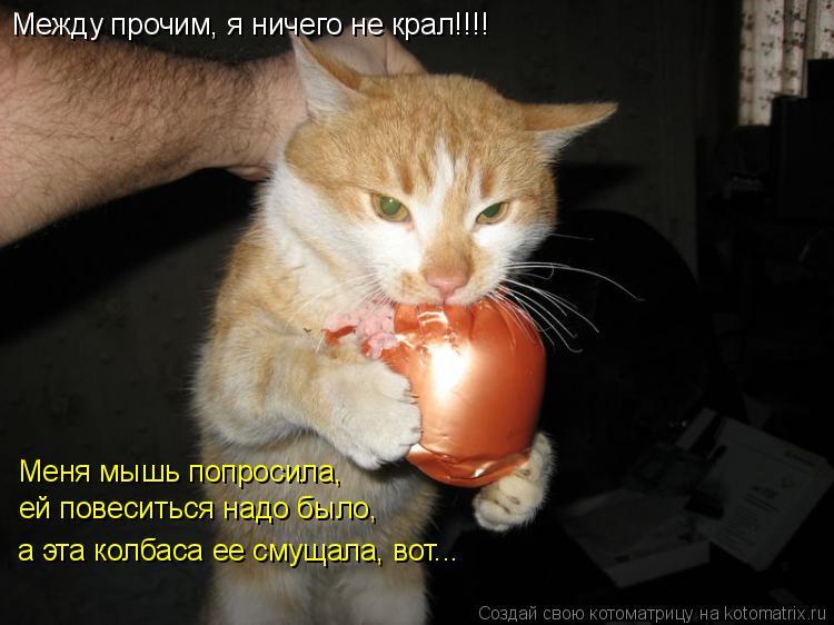 Котоматрица: Между прочим, я ничего не крал!!!! Меня мышь попросила, ей повеситься надо было, а эта колбаса ее смущала, вот...