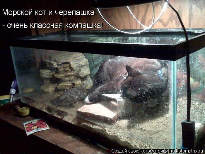 Котоматрица: Морской кот и черепашка - очень классная компашка!