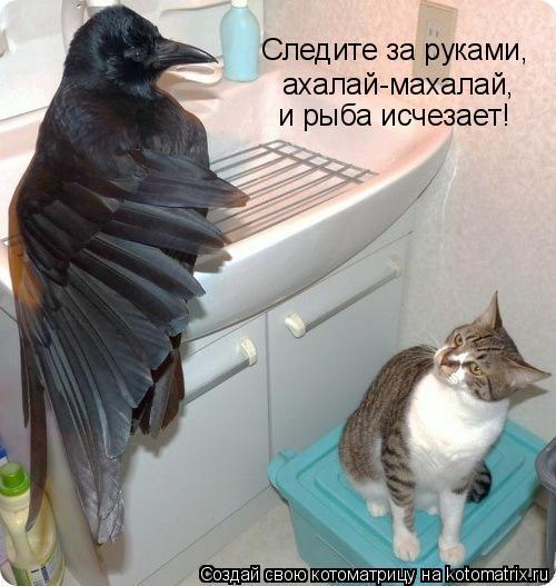 Котоматрица: Следите за руками, ахалай-махалай, и рыба исчезает!