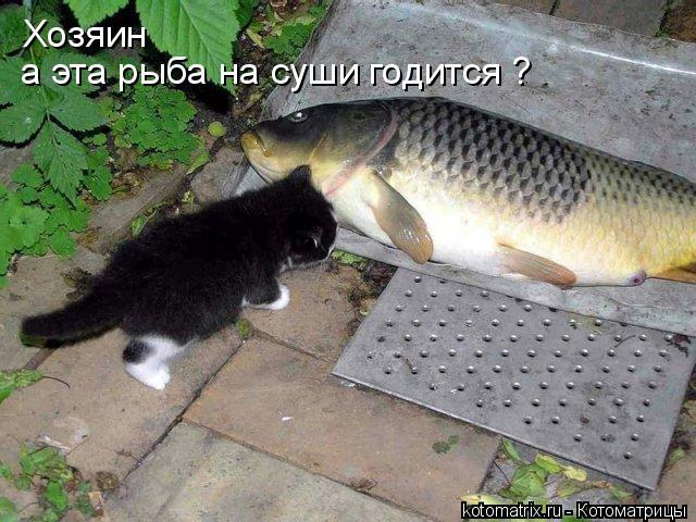Котоматрица: Хозяин а эта рыба на суши годится ?