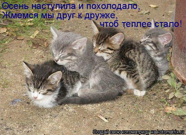 Котоматрица: Осень наступила и похолодало, Жмемся мы друг к дружке, чтоб теплее стало!