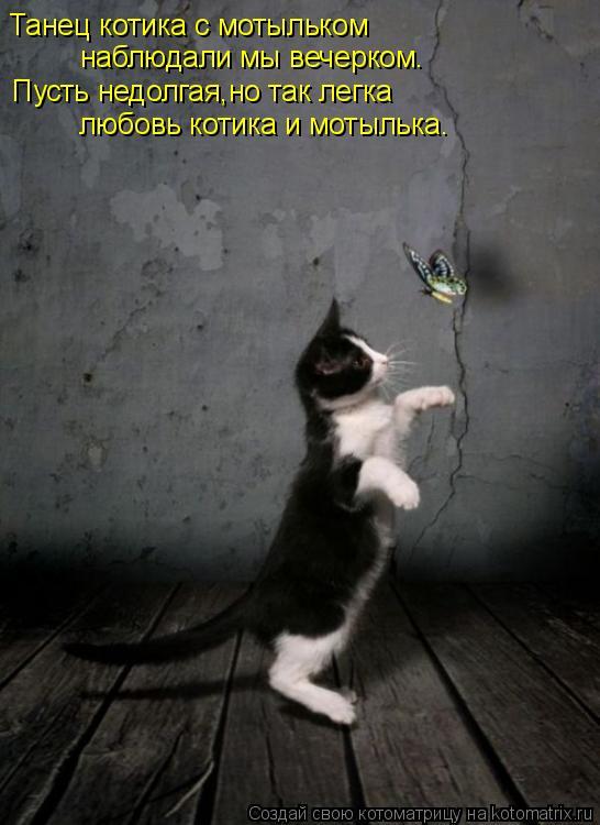 Котоматрица: Танец котика с мотыльком наблюдали мы вечерком. Пусть недолгая,но так легка любовь котика и мотылька.