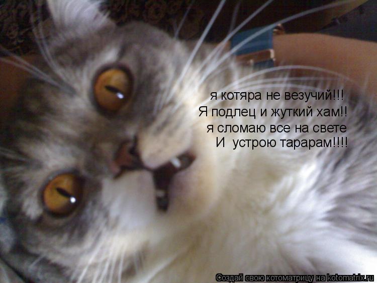 Котоматрица: я котяра не везучий!!! Я подлец и жуткий хам!! я сломаю все на свете И  устрою тарарам!!!!