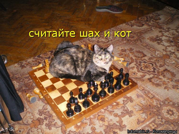 Котоматрица: считайте шах и кот
