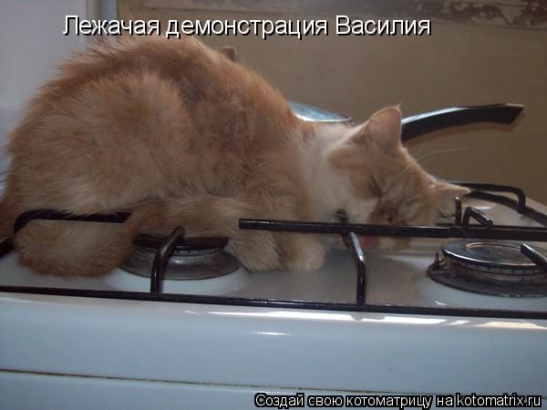 Котоматрица: Лежачая демонстрация Василия