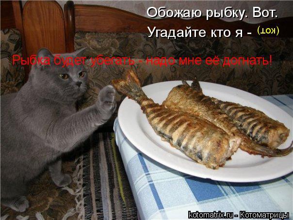 Котоматрица: Обожаю рыбку. Вот. Угадайте кто я - Рыбка будет убегать - надо мне её догнать! (кот)