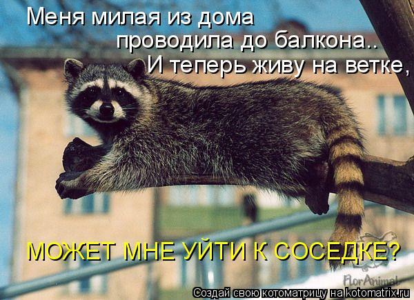 Котоматрица: Меня милая из дома  проводила до балкона.. И теперь живу на ветке, МОЖЕТ МНЕ УЙТИ К СОСЕДКЕ?