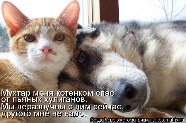 Котоматрица: Мухтар меня котенком спас от пьяных хулиганов. Мы неразлучны с ним сейчас, другого мне не надо.