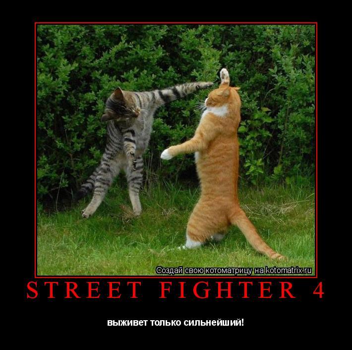 Котоматрица: street fighter 4 выживет только сильнейший!