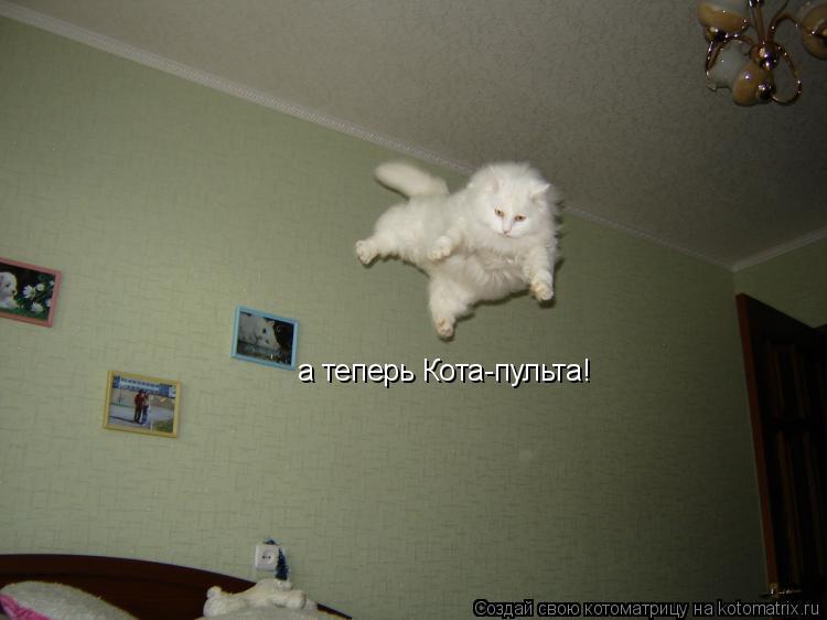 Котоматрица: а теперь Кота-пульта!