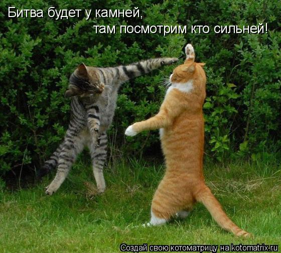 Котоматрица: Битва будет у камней, там посмотрим кто сильней!