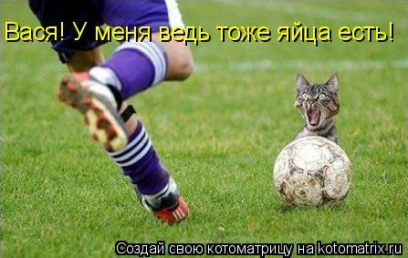 Котоматрица: Вася! У меня ведь тоже яйца есть!