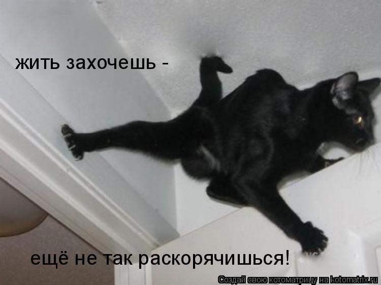 Котоматрица: жить захочешь - ещё не так раскорячишься!