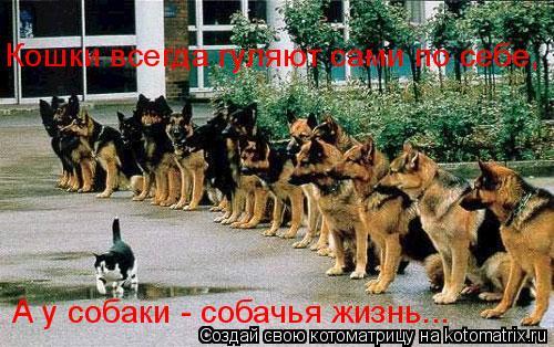 Котоматрица: Кошки всегда гуляют сами по себе, А у собаки - собачья жизнь...