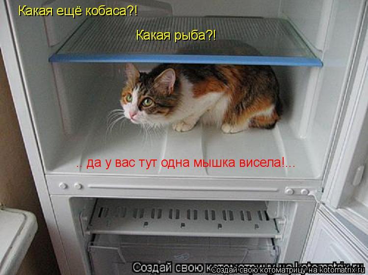 Котоматрица: .. да у вас тут одна мышка висела!... Какая ещё кобаса?! Какая рыба?!