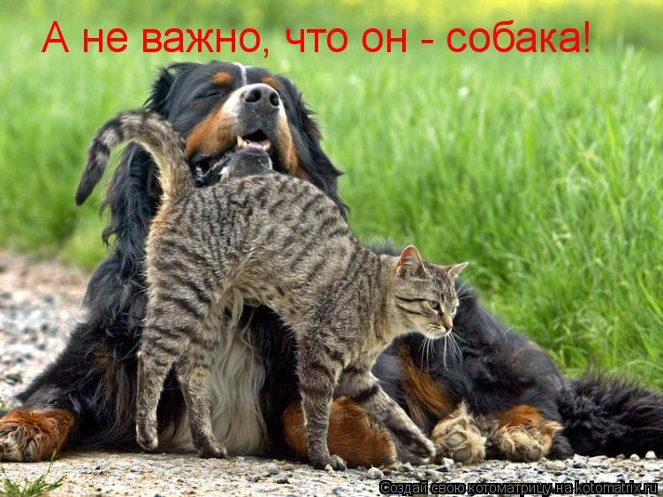 Котоматрица: А не важно, что он - собака!