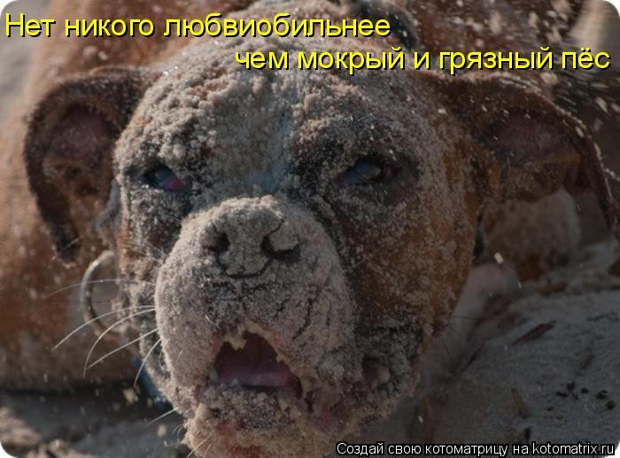 Котоматрица - Нет никого любвиобильнее  чем мокрый и грязный пёс