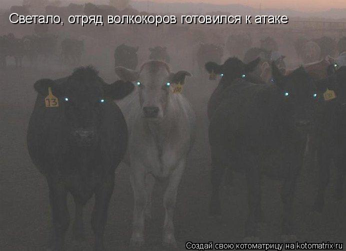 Котоматрица: Светало, отряд волкокоров готовился к атаке