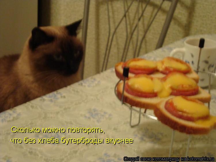 Котоматрица: Сколько можно повторять, что без хлеба бутерброды вкуснее