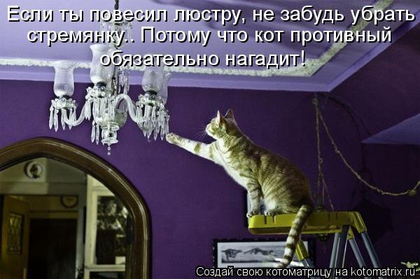 Котоматрица: Если ты повесил люстру, не забудь убрать стремянку.. Потому что кот противный обязательно нагадит!