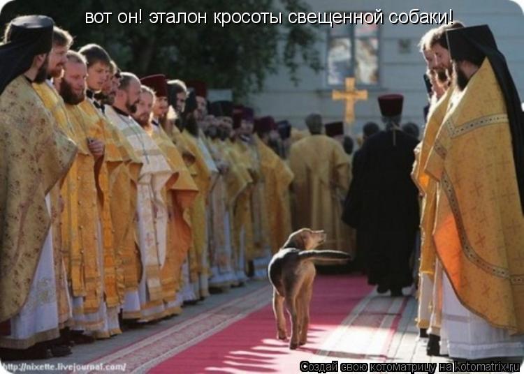 Котоматрица: вот он! эталон кросоты свещенной собаки!