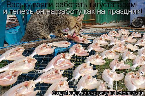 Котоматрица: Ваську взяли работать гигустатаром! и теперь он на работу как на праздник!