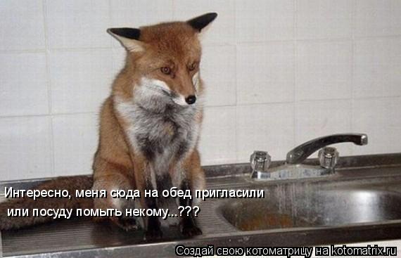 Котоматрица: Интересно, меня сюда на обед пригласили или посуду помыть некому...???