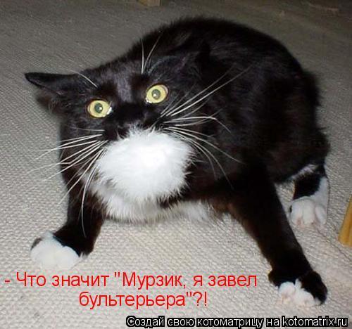"""Котоматрица: - Что значит """"Мурзик, я завел  бультерьера""""?!"""