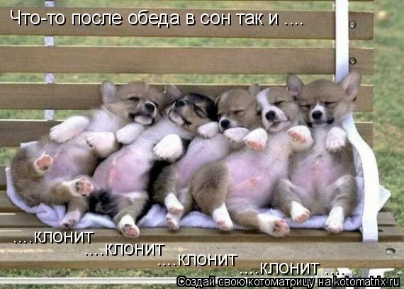 Котоматрица: Что-то после обеда в сон так и .... ....клонит ....клонит ....клонит ....клонит ....