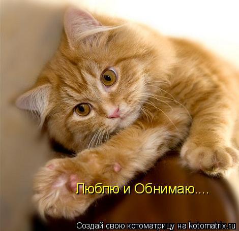 Котоматрица: Люблю и Обнимаю....
