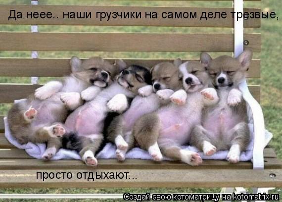 Котоматрица: Да неее.. наши грузчики на самом деле трезвые,  просто отдыхают...