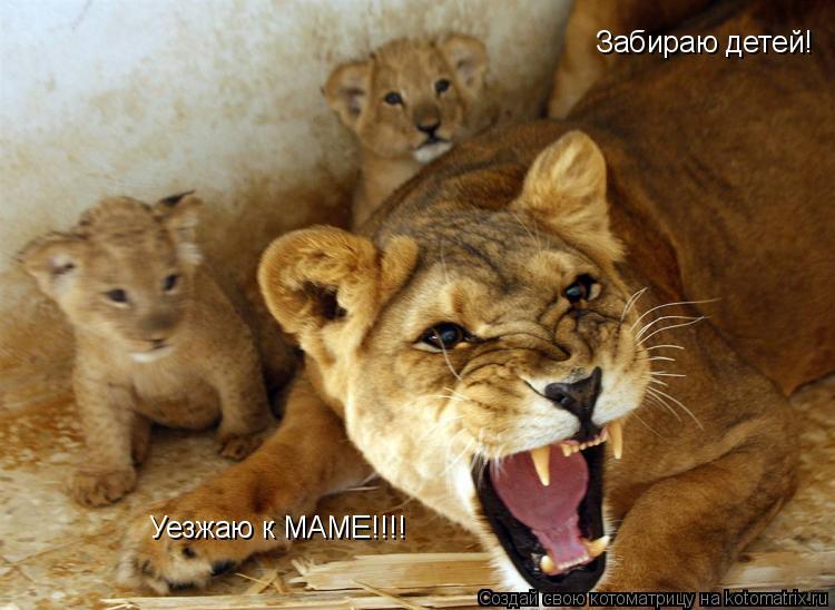 Котоматрица: Забираю детей! Уезжаю к МАМЕ!!!!