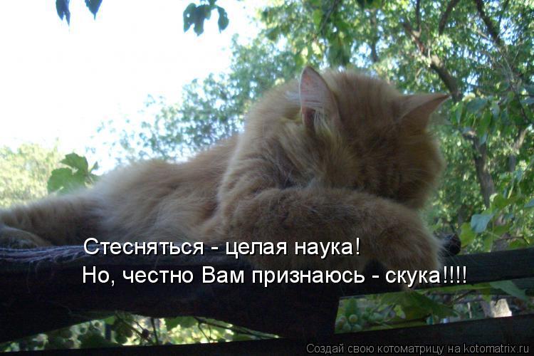 Котоматрица: Стесняться - целая наука! Но, честно Вам признаюсь - скука!!!!