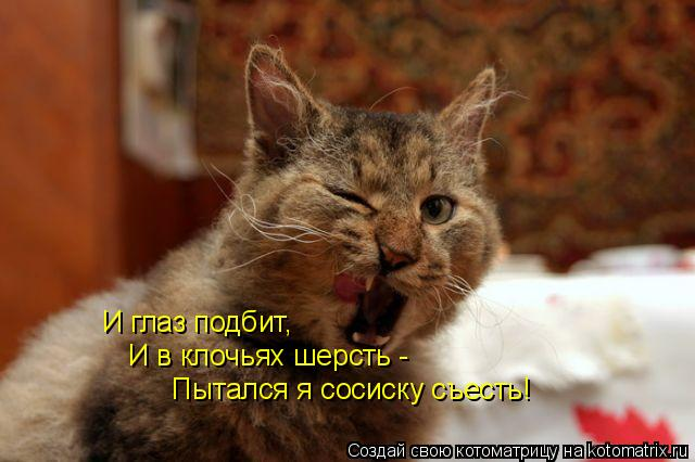 Котоматрица: И глаз подбит, И в клочьях шерсть - Пытался я сосиску съесть!
