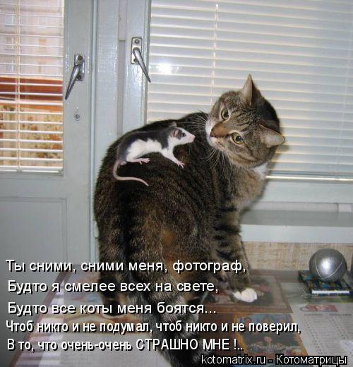 Котоматрица: Ты сними, сними меня, фотограф, Будто я смелее всех на свете, Будто все коты меня боятся... Чтоб никто и не подумал, чтоб никто и не поверил, В т