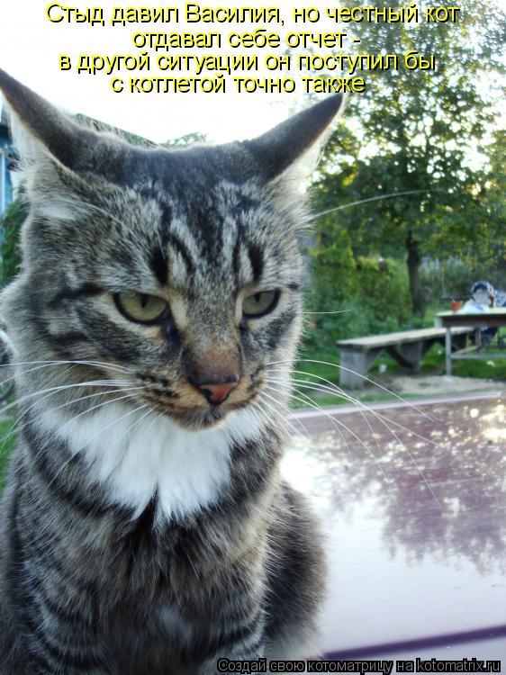Котоматрица: Стыд давил Василия, но честный кот  отдавал себе отчет - в другой ситуации он поступил бы  с котлетой точно также