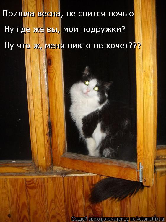 Котоматрица: Пришла весна, не спится ночью Ну где же вы, мои подружки? Ну что ж, меня никто не хочет???