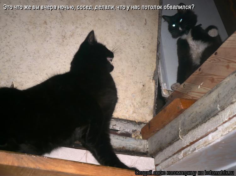 Котоматрица: Это что же вы вчера ночью, сосед, делали, что у нас потолок обвалился?