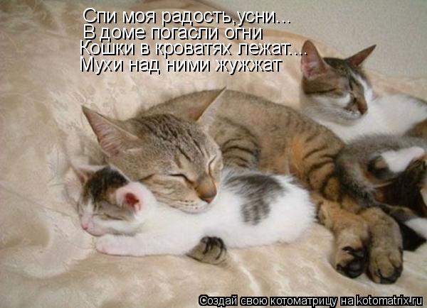 Котоматрица: Cпи моя радость,усни... В доме погасли огни Кошки в кроватях лежат.... Мухи над ними жужжат