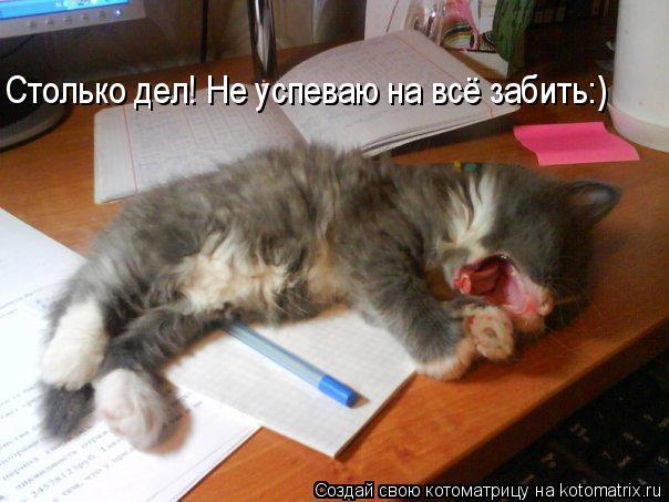 Котоматрица: Столько дел! Не успеваю на всё забить:)